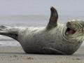 ROFL Seals thumb
